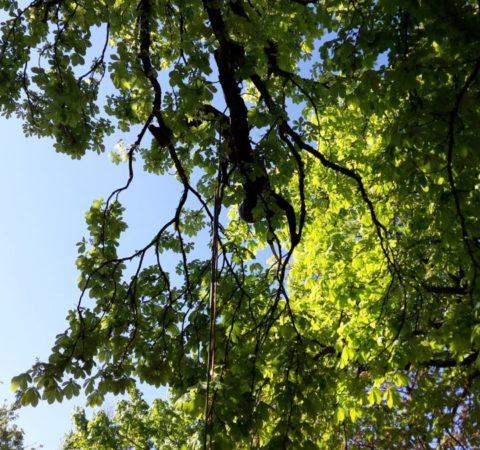 Baumpflege-Biergarten-4