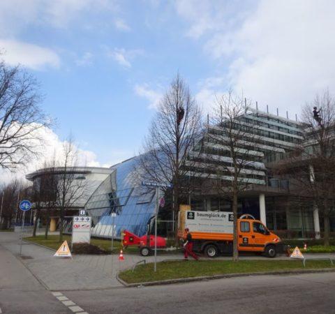 Baumpflege-Deutschen-Bundesbank-2
