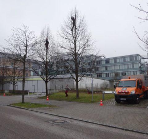 Baumpflege-Deutschen-Bundesbank-3