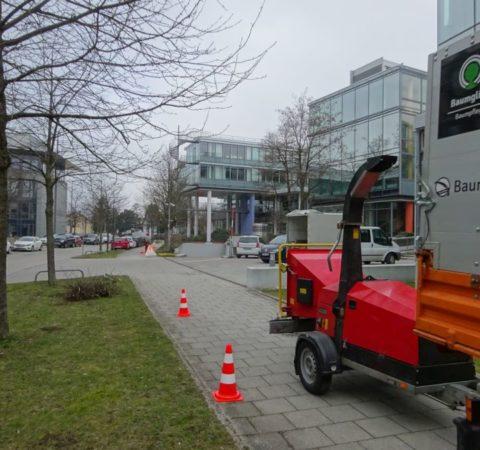 Baumpflege-Deutschen-Bundesbank-4