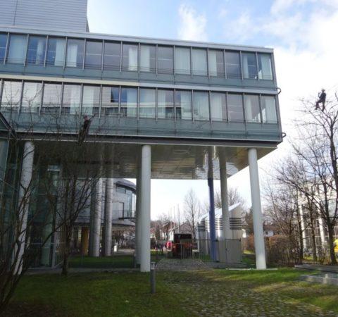 Baumpflege-Deutschen-Bundesbank-8