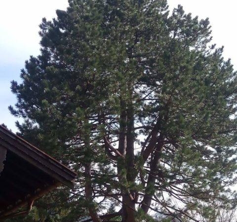 Baumpflege Tegernsee