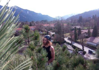 Baumpflege am Tegernsee