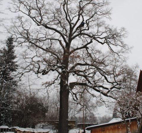 Baumpflege Starnberger See 2