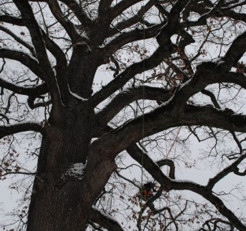 Baumpflege Starnberger See 3