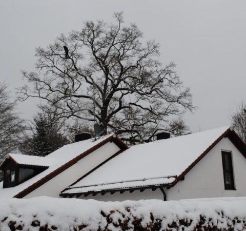 Baumpflege Starnberger See 4