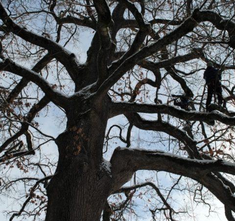 Baumpflege Starnberger See 5