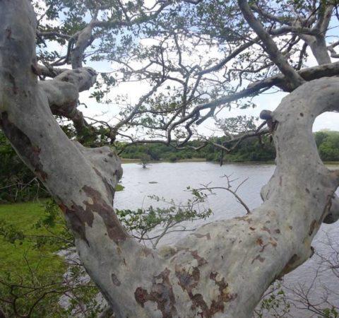 Baumexpedition Sri Lanka