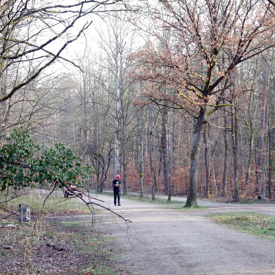 Baumgutachten für Nürnbergs Marienbergpark Luitpoldhain Pegnitztal etc