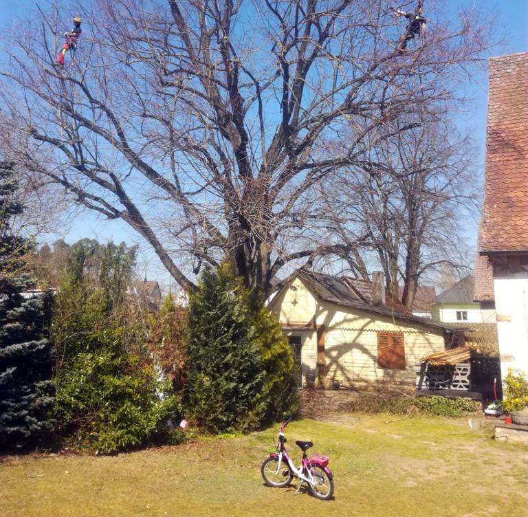 Baumfällung Baumschnitt Baumpflege für Nuernberg: Baumglück